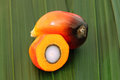 Oil palm fruit Royalty Free Stock Photography