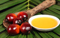 Oil palm fruit and cooking oil fruits a plate of on leaves background Stock Images