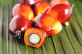 Oil palm fruit cut fresh fruits on the leaves background Royalty Free Stock Images