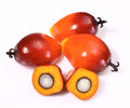 Oil palm fruit a group of fruits on the white background Royalty Free Stock Image