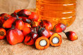 Oil palm fruits with palm oil Royalty Free Stock Photo