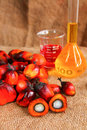 Oil palm fruits with palm oil Stock Image