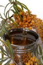 Oil of sea-buckthorn berries. Royalty Free Stock Images