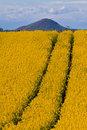 Oil seed rape & hill Stock Photos