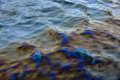 Oil spill litters the Sheepshead bay Stock Photography