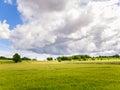 Oilseed rape field under dramatic sky Royalty Free Stock Photo