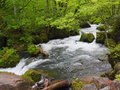 Oirase gorge in fresh green aomori japan is a picturesque mountain stream prefecture that is one of s most famous and popular Stock Image