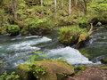 Oirase gorge in fresh green aomori japan is a picturesque mountain stream prefecture that is one of s most famous and popular Royalty Free Stock Image