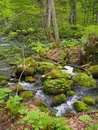 Oirase gorge in fresh green aomori japan is a picturesque mountain stream prefecture that is one of s most famous and popular Royalty Free Stock Photography