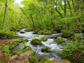 Oirase gorge in fresh green aomori japan is a picturesque mountain stream prefecture that is one of s most famous and popular Stock Photography