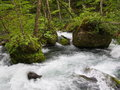 Oirase gorge in fresh green aomori japan is a picturesque mountain stream prefecture that is one of s most famous and popular Royalty Free Stock Photos