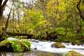 Oirase stream autumn colors of at aomori japan Royalty Free Stock Photo