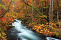 Oirase stream autumn colors of at aomori japan Royalty Free Stock Images