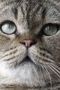 Ojos de gato Imágenes de archivo libres de regalías