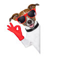 Ok fingers dog with red gloves and glasses behind banner Stock Photo