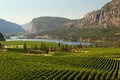 Okanagan Valley Vineyard Scenic, British Columbia Royalty Free Stock Photo