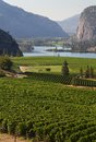 Okanagan Vineyard Scenic, British Columbia Royalty Free Stock Photo