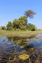 Okavango Delta water landscape. North of Botswana. Royalty Free Stock Image