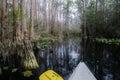 Okefenokee Canoe Paddle Royalty Free Stock Photo