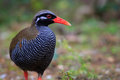 Okinawa Rail Royalty Free Stock Photo