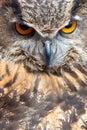 Oko sowa Zdjęcia Stock
