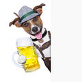 Oktoberfest dog with a beer mug smiling happy behing a placard Stock Photo