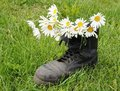 Old army boot and chamomiles Royalty Free Stock Photo