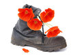 Old army boot and red poppy flowers Royalty Free Stock Photo