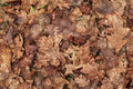Old Autumn Leaves. Background ...