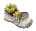 Old baby shoe and plant isolated Royalty Free Stock Photo