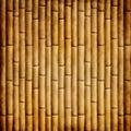 Starý bambus