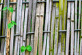 Old bamboo fence slings with green leaves Royalty Free Stock Photos