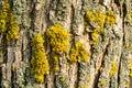 Old bark macro