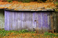 Old barn purple with fallen leaves on the roof Royalty Free Stock Photo