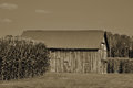 Old barn in sephia standing the middle of two corn fields Royalty Free Stock Photos