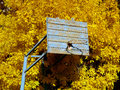 Old basketball backboard against autumnal tree Royalty Free Stock Images