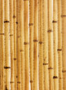 Old beige bamboo fence fragment Stock Image