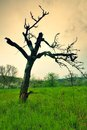 Old bended apple tree Royalty Free Stock Photo