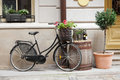 Old bicycle carrying flowers Royalty Free Stock Photo
