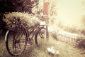 Old bicycle with flower in garden Royalty Free Stock Photo