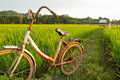 Old bicycle with paddy field background nature of rice Stock Image