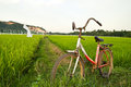 Old bicycle with paddy field background nature of rice Royalty Free Stock Photos