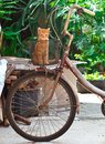 Old bike with cute cat Stock Images