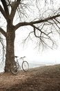 Old bike near the tree vintage in fog Royalty Free Stock Photography