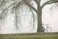 Old bike near the tree vintage in fog Stock Photography