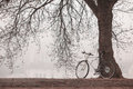 Old bike near the tree vintage in fog Stock Photo