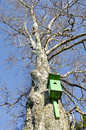 Old bird nesting box on birch tree in spring green time Stock Images