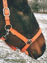 Old blind horse. Horse without eye ball