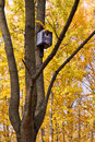 Old blue birdhouse on the tree in autumn park Royalty Free Stock Photo
