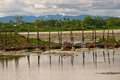 Old boat boats in a row in a lotus pond and surrounding mountains in the background Stock Photo